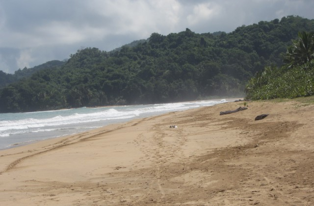 Playa el limon samana 6
